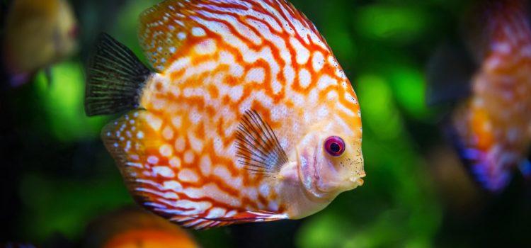 aquarium water softeners